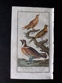 Buffon 1785 Antque Hand Colored Bird Print. Sandgrouse, Senegal Sandgrouse 3-5